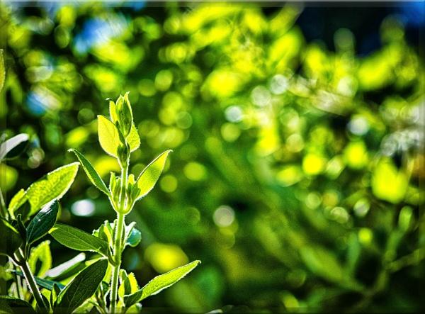 foliage+hdr by bornstupix2
