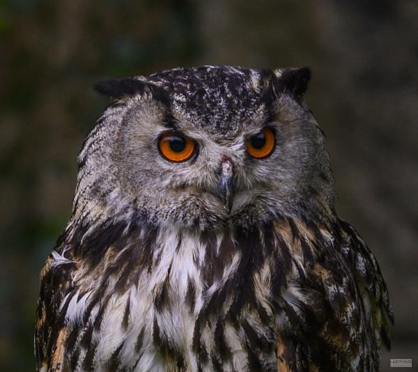 Eagle Owl by LighthousePhotography