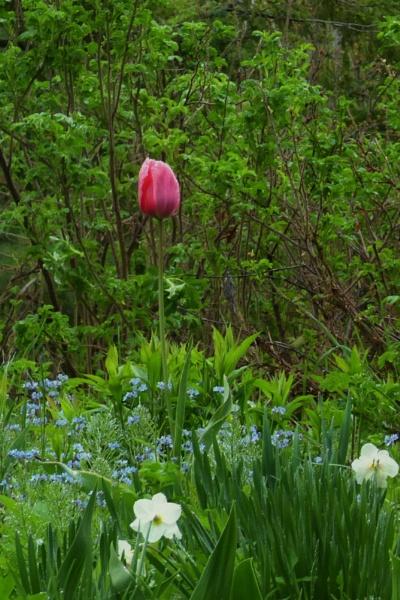 Wild Spring Garden by Joline