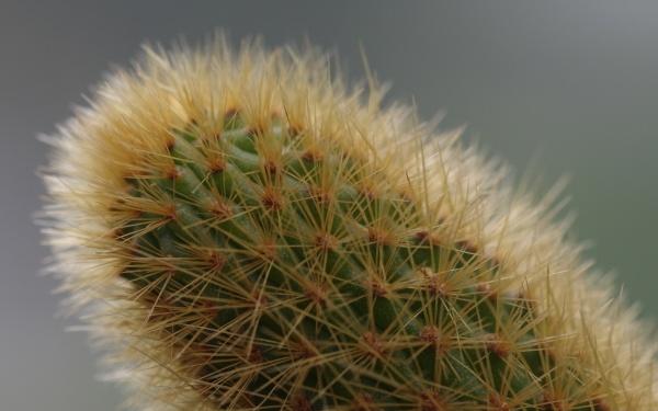 Cactus by Kako