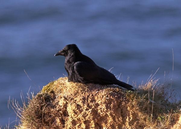 Crow\'s nest by oldgreyheron