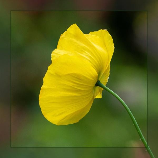 Winterbourne Blooms by DicksPics