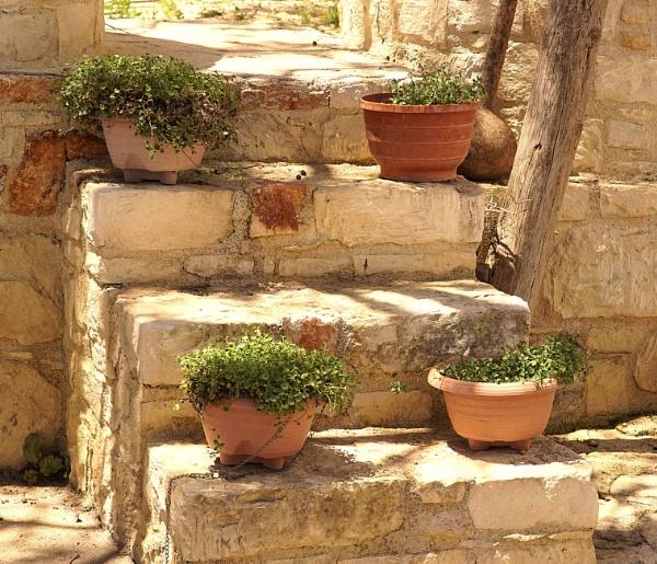 Village Plants by Sonyfan