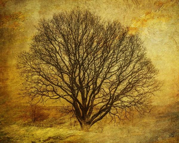 Tree for Brenda by AlanJ