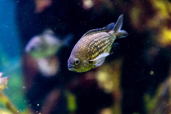 Fish in water tank by rninov