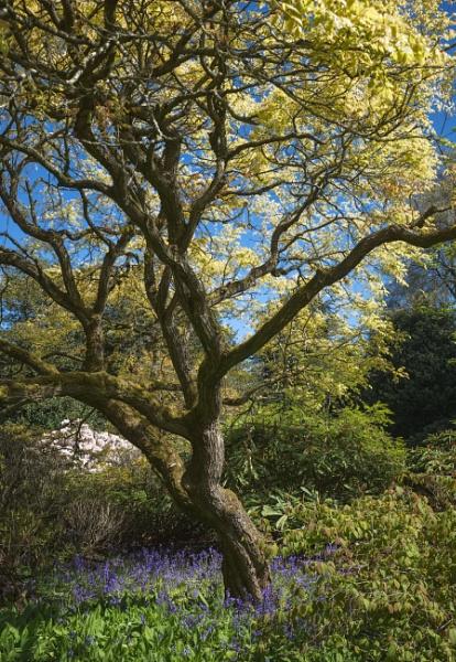 Edinburgh Botanic Gardens by BigAlKabMan