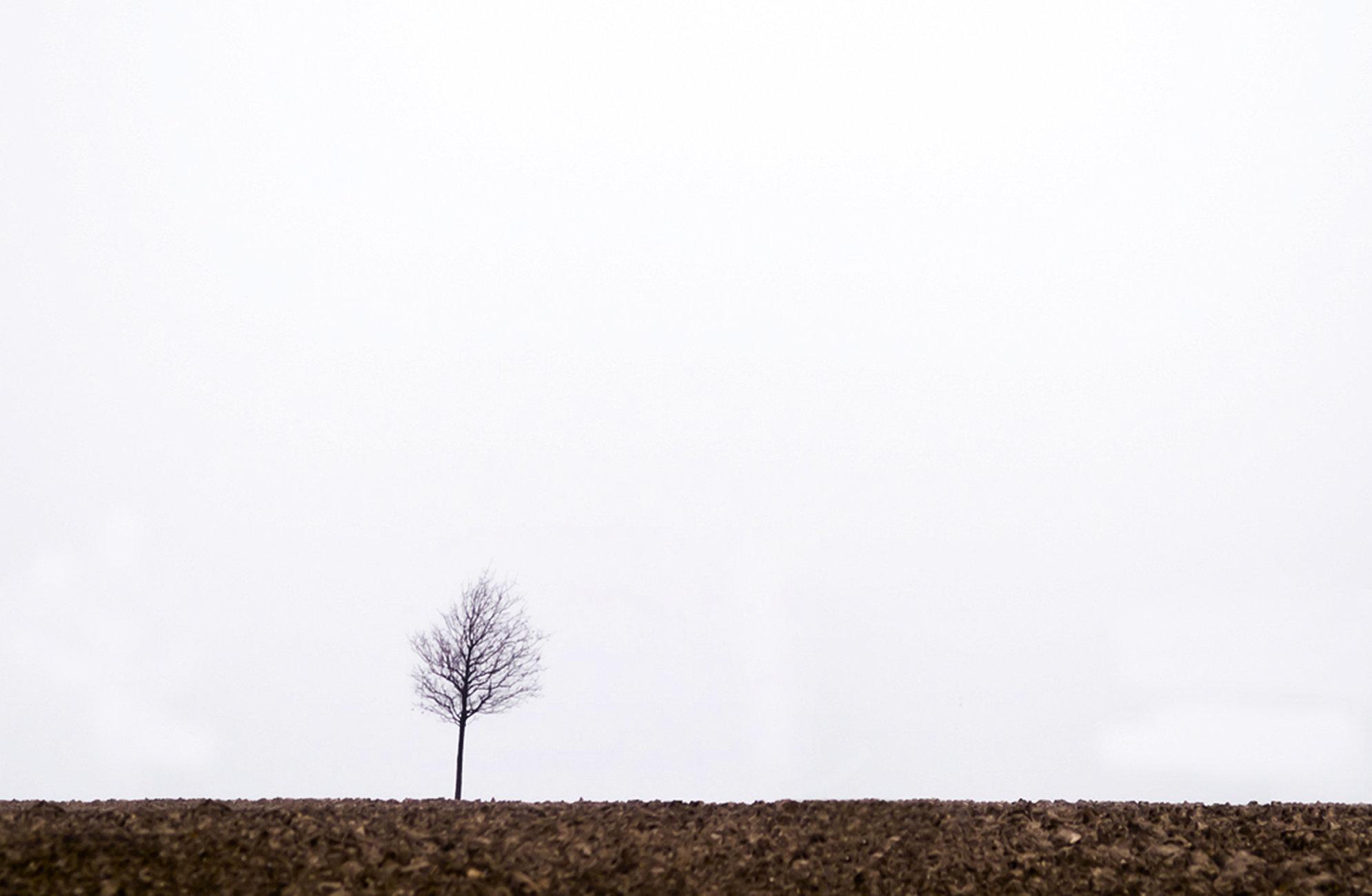 A Tree Grows in Denmark