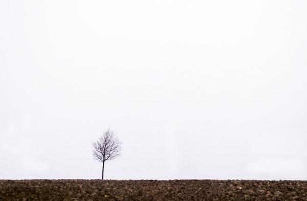 A Tree Grows in Denmark by FotoDen