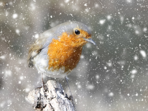 ""\""""Beauty and The Snow"""". by adrianedwa""600|450|?|en|2|24c4bfe9708272d7ebf1f5a9c3a882f1|False|UNLIKELY|0.30443307757377625