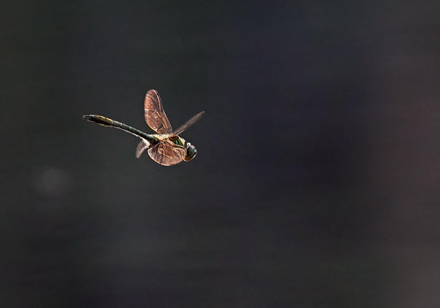 Dragonfly in Espoo
