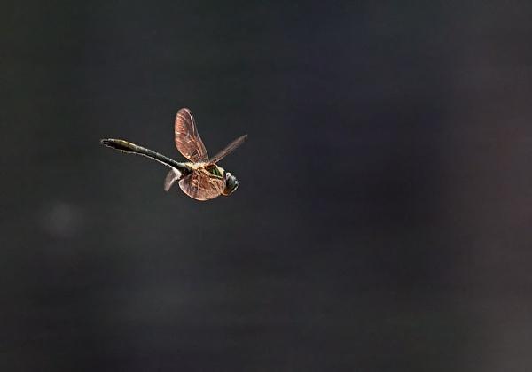 Dragonfly in Espoo by hannukon