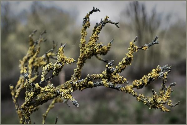 Lichen by AlfieK