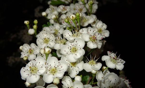 Blossom by SauliusR