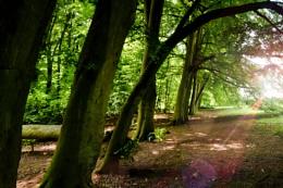 English Trees II