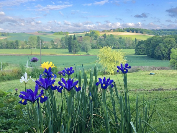 Irises on landscape by Atadia