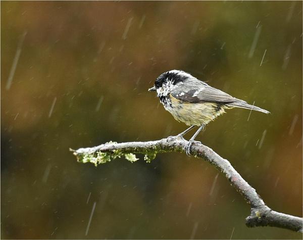 Rain,Rain, Rain by MalcolmM