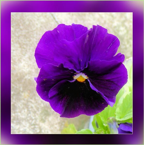 Deep Purple by Joline