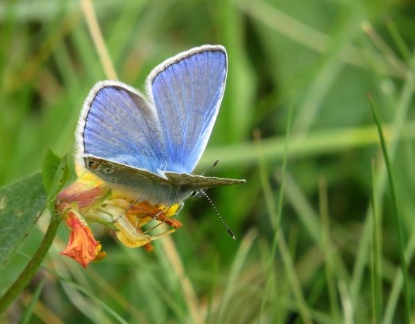 Beauty in Blue by SUE118