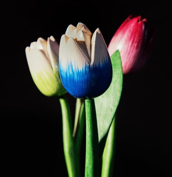 Three Tulips by Merlin_k