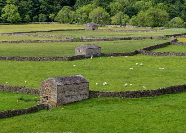 Field Barns in Swaledale by iancrowson