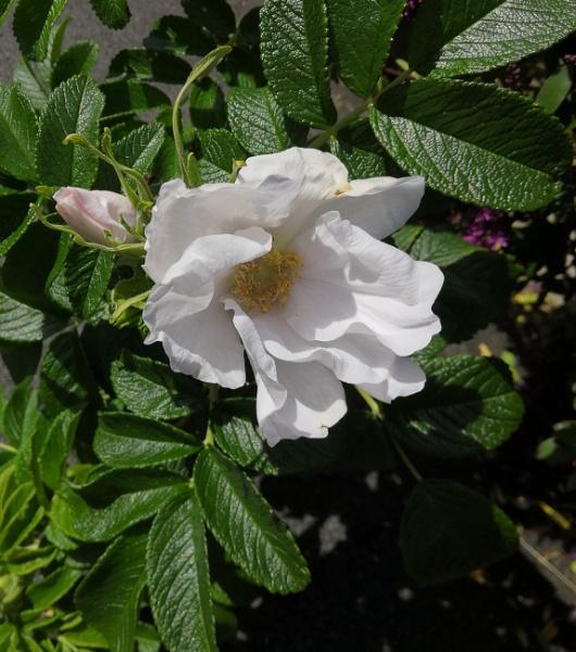 Flower by robredz