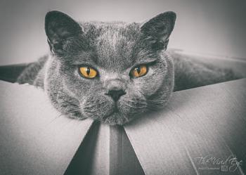 Cat in a Box #2