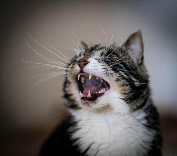 Yawn. by Jukka