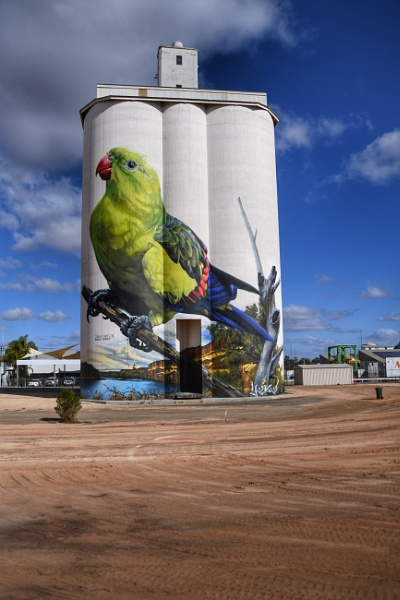 Regent parrot by ColleenA