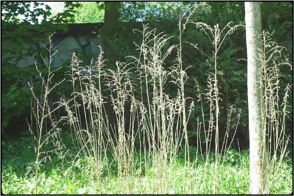 weed still by FabioKeiner