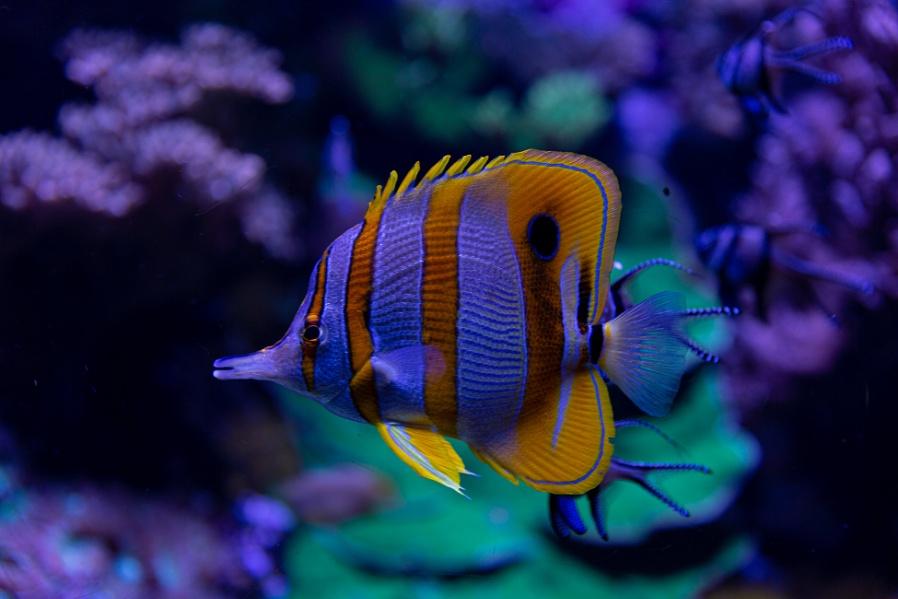 Fish in water tank