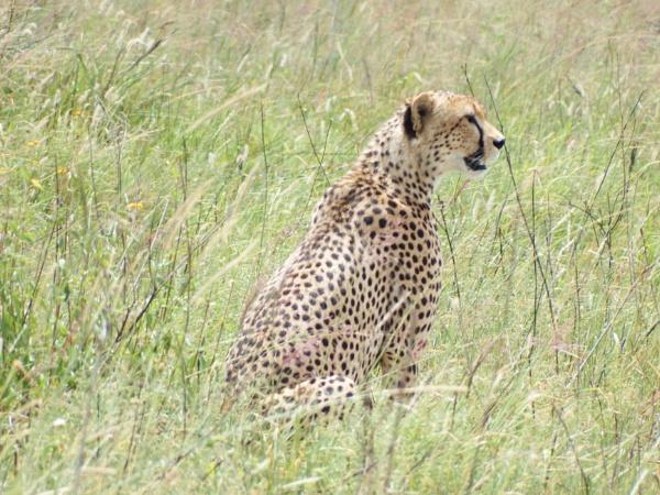 Amboselli by Nigeltraveller