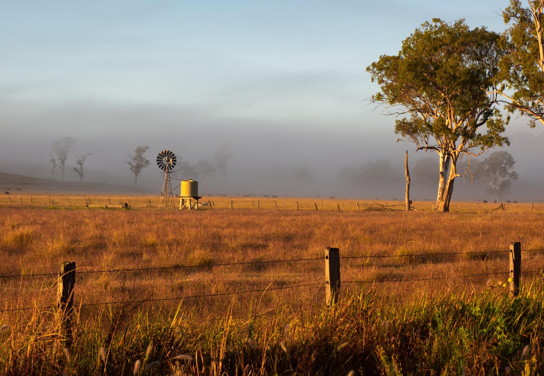 Pastoral Morning, Beaudesert, Queensland