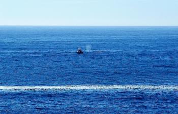 Whale Watching Along The Oregon Coast.