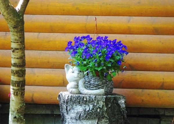 Garden cat by Kabrielle