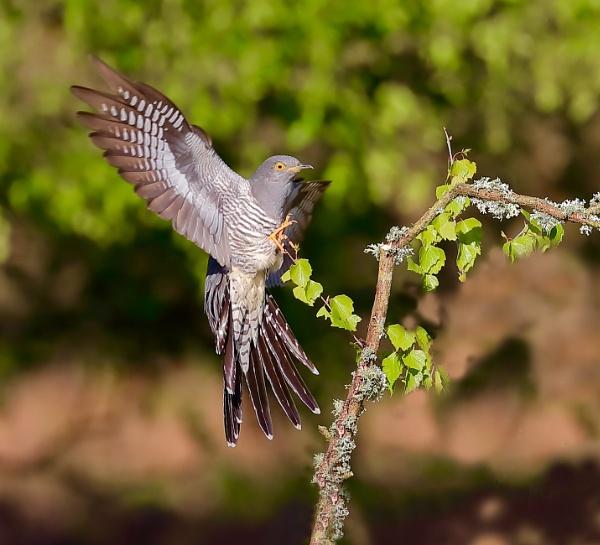 Flying in by Juanita
