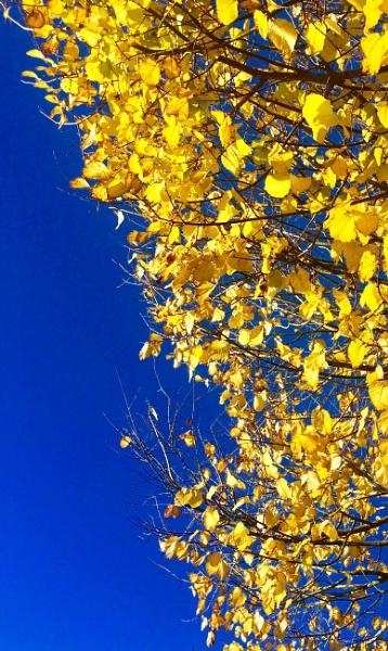 Late Summer Leaves by heyitshenry