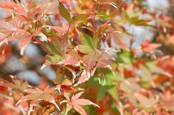 Orange Leaves by heyitshenry