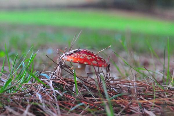 Mushroom Top by heyitshenry