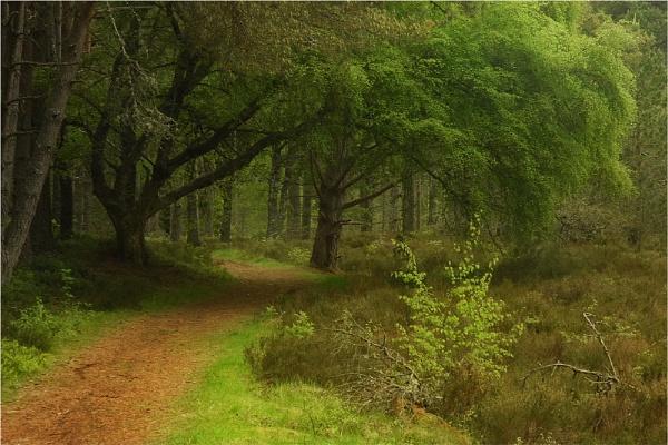 Glenfeshie Woodland