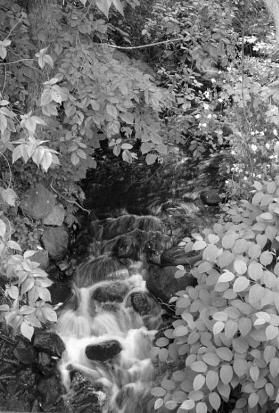 "~ \""Wandering Stream\"" by LexEquine"