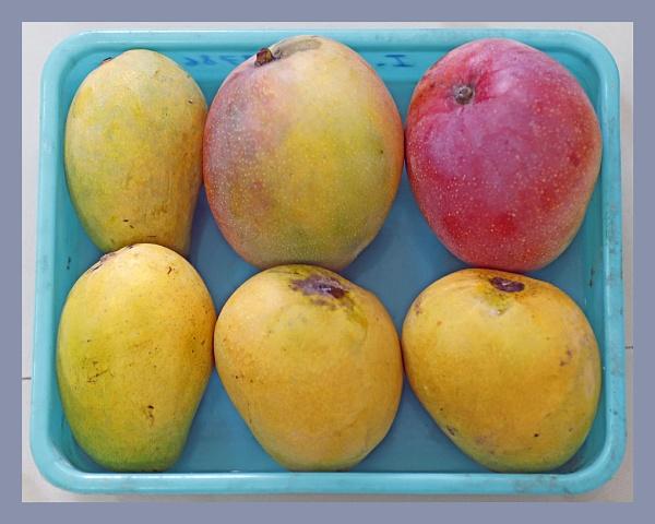 Mango Season. by prabhusinha