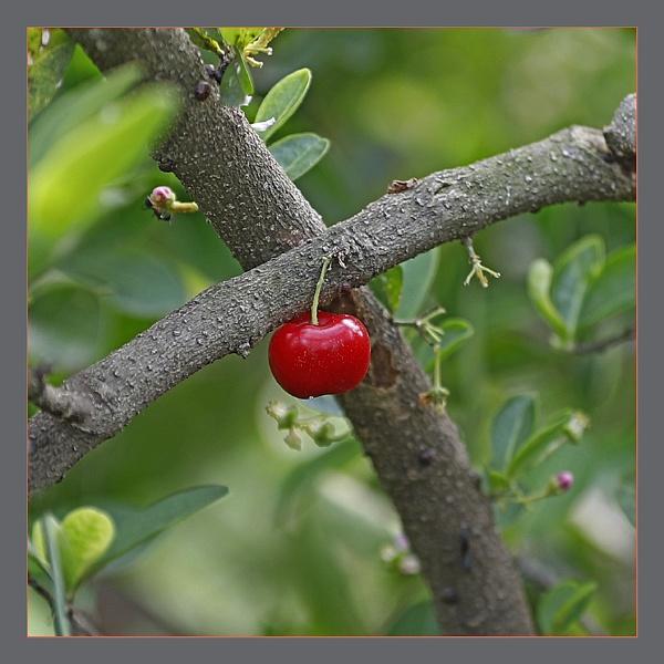 The Fruit & Flower by prabhusinha