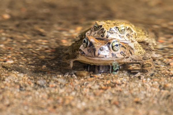 Frisky Frogs by WorldInFocus