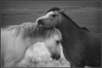 Horseplay.