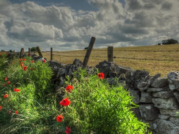 Roadside Reds by ianmoorcroft