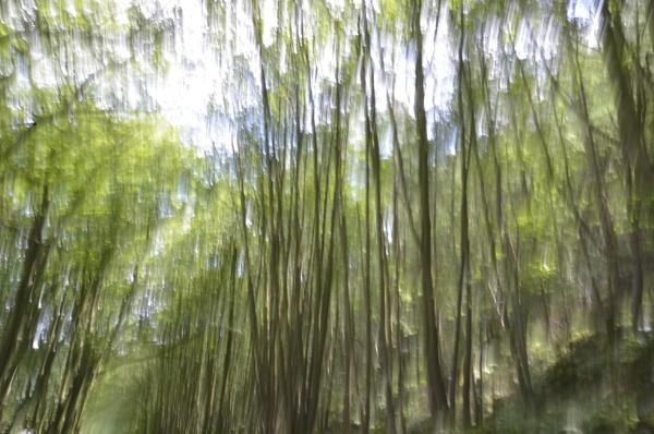 Trees by dhandjh