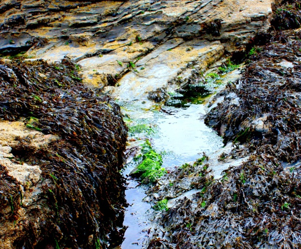 Rock pools by ddolfelin