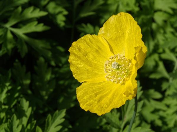 Batsford Arboretum Bloom by johnzsv