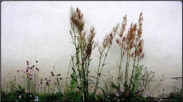weed wood by FabioKeiner