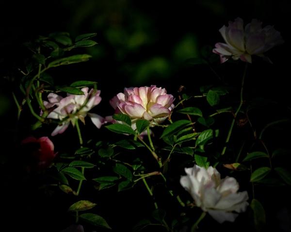 Last light. by Mollycat
